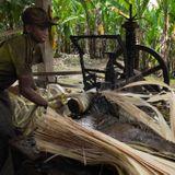 Ecuador's plantation workers pin hopes on historic slavery ruling