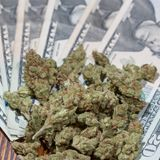 Illinois Collects $205 Million In Marijuana Taxes From First Year Of Legal Sales