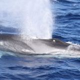 Using whale songs to image beneath the ocean's floor