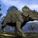 Possible Dinosaur DNA Has Been Found