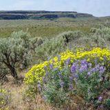 State video highlights underappreciated, embattled Washington shrub-steppe