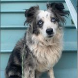 Dog stolen outside San Francisco grocery store found after 4 months