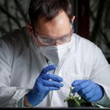 Close up of researcher with plant