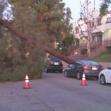 Gusty winds knock over trees across Southern California