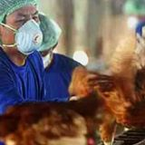 Russia reports first human cases of H5N8 bird flu