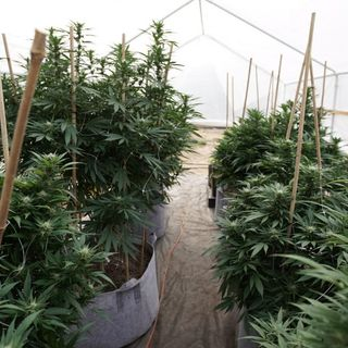 Virginia Conference Committee Faces Saturday Deadline To Finalize Marijuana Legalization Proposal