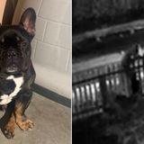 San Jose family seeks help finding stolen French Bulldog