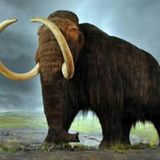 Dartmouth study reveals potential overlap between woolly mammoths and humans in New England