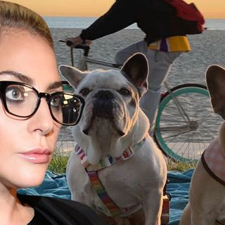 Lady Gaga Dognapping May Have Been Gang Initiation, Reward Not Yet Paid