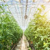 Semi-Transparent Solar Cells Can Power Greenhouses Without Stunting Plant Growth