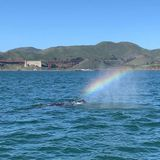 Whale filmed spraying a rainbow in the San Francisco Bay