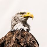 Scientists Finally Identify a Deadly Toxin That's Been Killing Birds | WIRED
