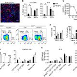 Lymphangiogenesis-inducing vaccines elicit potent and long-lasting T cell immunity against melanomas