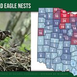 Seneca County among top 5 counties with most bald eagle nests in Ohio: See how many your county has