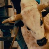 Dan Rodimer Launches Congressional Bid, Rides Bull: 'Nancy Pelosi'