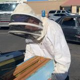 Man returns from shopping to find 15,000 bees in his car