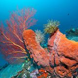 Sponges can survive massive doses of radiation without getting cancer