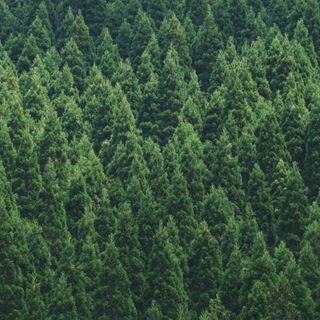 Trees Are Now Racist: Portland School Delays Vote On 'Evergreen' Mascot Over Fears People May Link It To Lynching