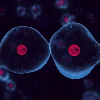 Scientists Create Simple Synthetic Cell That Grows and Divides Normally
