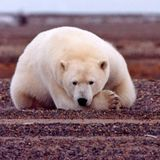 Effects of Climate Change Unknown For 98% of Land Mammals Scientists Warn - The Debrief