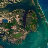 'Ghost forests' are invading the North Carolina coast