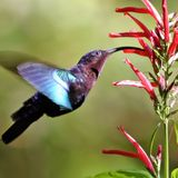Keep Your Eyes Peeled, Thousands Of Hummingbirds Are Headed Right For Colorado During Their Migration This Spring