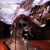'Like Godzilla, but actually real': study shows T. rex numbered 2.5 billion