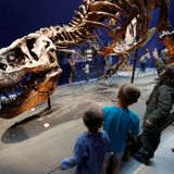 Around 2.5 billion Tyrannosaurus rex have walked the Earth, according to new study