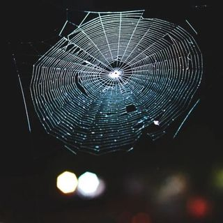 Scientists Translated Spiderwebs Into Music, And It's Beyond Stunning