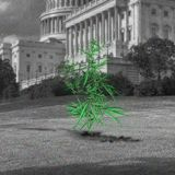 Congress Is Closer Than Ever to Ending the Federal War on Weed
