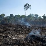 Humans Have Altered 97 Percent of Earth's Land Through Habitat and Species Loss