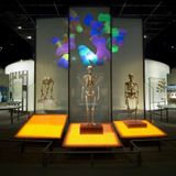 Creativity and community: How modern humans overcame the Neanderthals