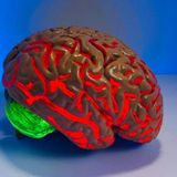 Experimental Drug Boosts Brain Cell Cleaning to Reverse Alzheimer's Disease Symptoms in Mice