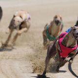 Greyhound tests positive for meth after winning dog race - National | Globalnews.ca