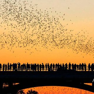 Texas Bat-Watching The Unusual Tourist Attraction