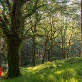 UK woodlands 'at crisis point' amid wildlife decline