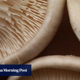 Eating two mushrooms a day nearly halves cancer risk, study finds