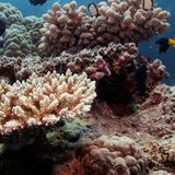 UN irks Australia by recommending that Great Barrier Reef be listed 'in danger'