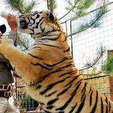After 'Tiger King,' Celebrities Rally Around Passage of Big Cat Public Safety Act