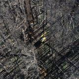 Loggers return to native forests burnt in summer bushfires