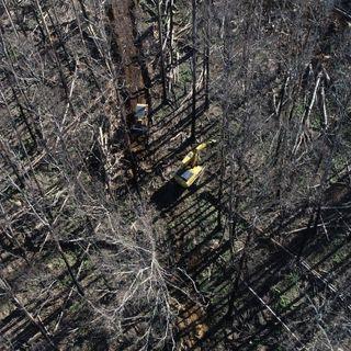 Loggers return to native forests burnt in summer bushfires