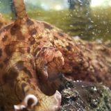 Sea slug study explains what happens when a human brain learns