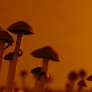 From MDMA To Psilocybin, U.S. Science's Psychedelic Revival