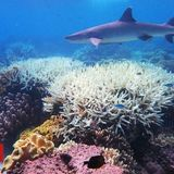 Scientists 'find way to fight coral bleaching'