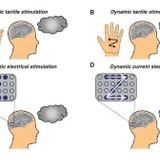 "Blind Adults Were Able To ""See"" Letters Traced on Their Brain Using Electrical Stimulation"