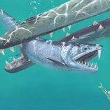 Saber-toothed anchovies roamed the oceans 45 million years ago