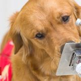 Trial starts to see if dogs can 'sniff out' virus