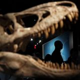 Man breaks into dinosaur exhibit, snaps selfies with head inside T. rex's mouth, police say