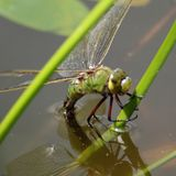 Freshwater species boom in the time of the insect apocalypse
