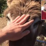 Man, pet donkey cry as they reunite after Spain's COVID-19 lockdown